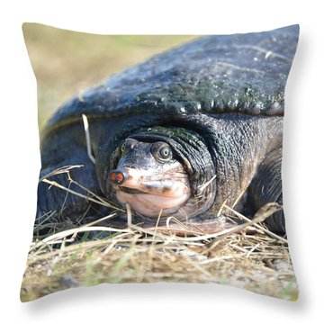 I Havnt Seen You Before Throw Pillow by Kathy Gibbons