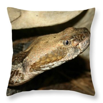 Throw Pillow featuring the photograph I See You And I Don't Like It by David Dunham