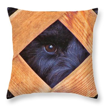 Look Closely  Throw Pillow by Michele Penner