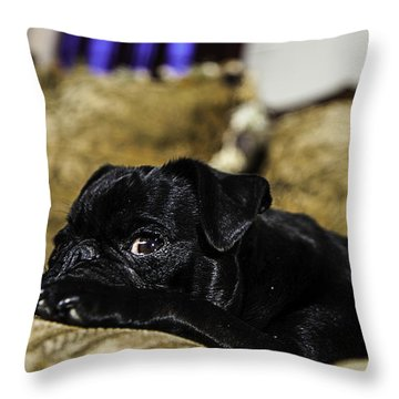 Throw Pillow featuring the photograph I See You by Ryan Smith