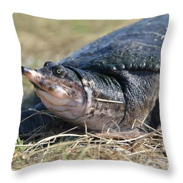 I Think It Adds Character Throw Pillow by Kathy Gibbons