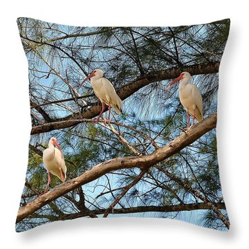 Ibis I May, Ibis I Might... Throw Pillow