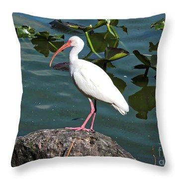 Ibis Rock Throw Pillow by Carol Groenen