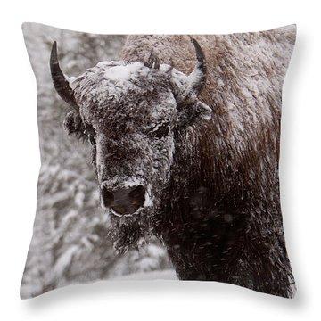 Ice Cold Winter Buffalo Throw Pillow
