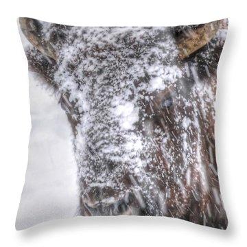 Ice Faced Throw Pillow