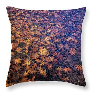 Ice On Oak Leaves Throw Pillow