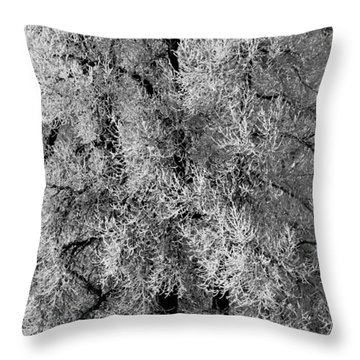 Throw Pillow featuring the photograph Iced Cottonwoods by Colleen Coccia