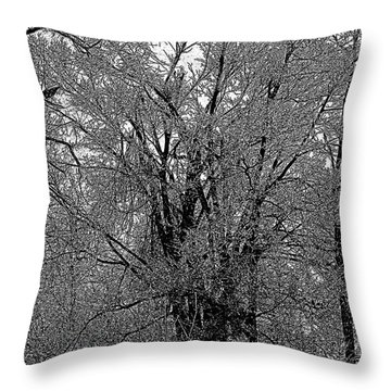 Iced Tree Throw Pillow by Craig Walters