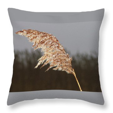Iced Up Throw Pillow