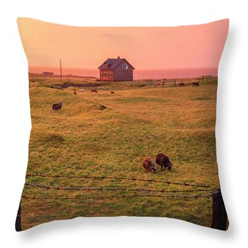 Icelandic Farm During Sunset Throw Pillow