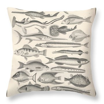 Ichthyology Throw Pillow by Dreyer Wildlife Print Collections