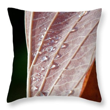Icy Fall Morning Throw Pillow by Lisa Knechtel