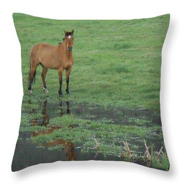 Idaho Farm Horse1 Throw Pillow by Cynthia Powell