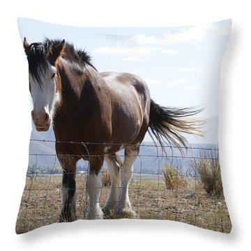 Idaho Work Horse 2 Throw Pillow by Cynthia Powell