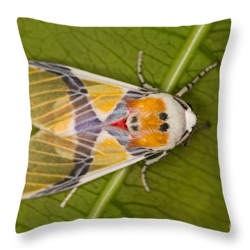 Idalus Carinosa Moth Throw Pillow by Gabor Pozsgai