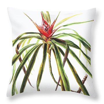 Ieie Plant Throw Pillow by Hawaiian Legacy Archive - Printscapes