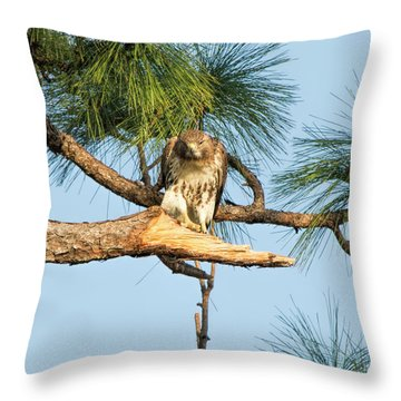 If Looks Could Kill - Hawk Throw Pillow