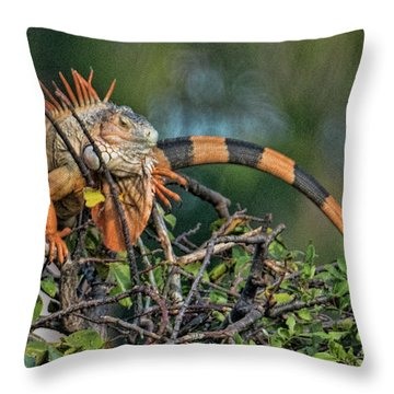 Throw Pillow featuring the photograph Iggy by Don Durfee