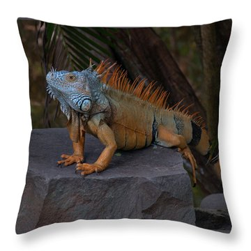 Throw Pillow featuring the photograph Iguana 2 by Jim Walls PhotoArtist