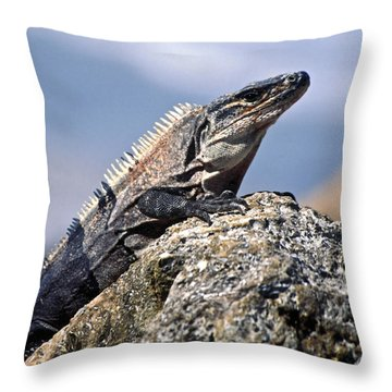 Iguana Throw Pillow by Sally Weigand