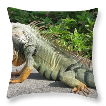 Throw Pillow featuring the photograph Iguania Sunbathing by Christiane Schulze Art And Photography