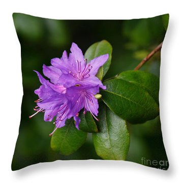 Ilam Violet Throw Pillow
