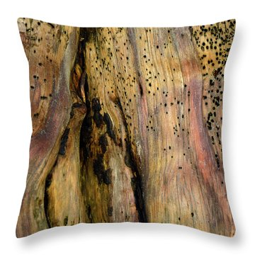 Illuminated Stump 02 Throw Pillow by Bruce Gourley