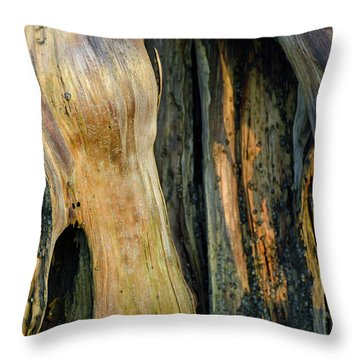 Illuminated Stump 03 Throw Pillow by Bruce Gourley
