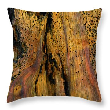 Illuminated Stump With Peeking Crab Throw Pillow by Bruce Gourley