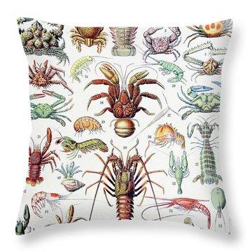 Illustration Of Crustaceans, 1923 Throw Pillow
