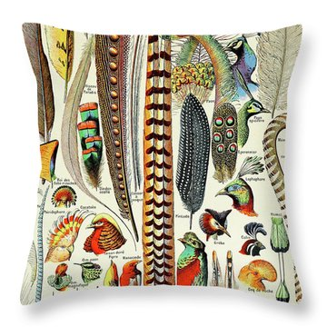 Illustration Of Feathers And Birds  Throw Pillow