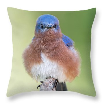 Throw Pillow featuring the photograph I May Be Fluffy But I'm No Powder Puff by Bonnie Barry