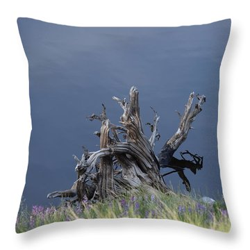 Stump Chambers Lake Hwy 14 Co Throw Pillow