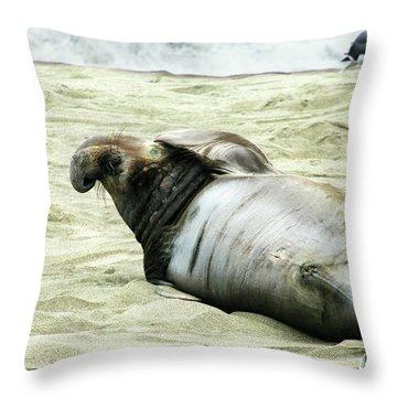 Throw Pillow featuring the photograph Im Too Sexy by Anthony Jones