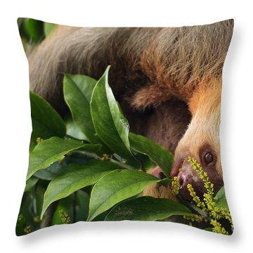I'm Trying To Eat Here Throw Pillow