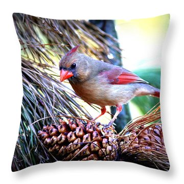 Img_0311 - Northern Cardinal Throw Pillow by Travis Truelove
