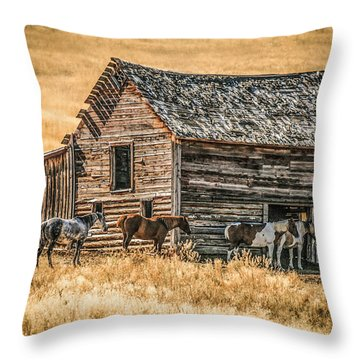 #2204 - Harrison Montana Throw Pillow