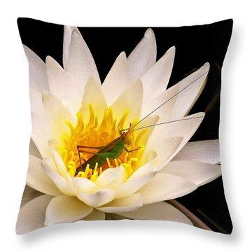 Img_5267gwp211 - Version 2 Throw Pillow