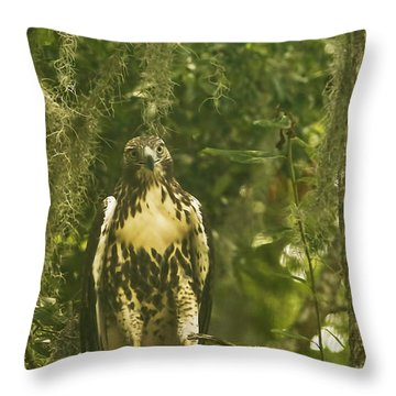 Immature Red-tail Hawk Throw Pillow by Phill Doherty