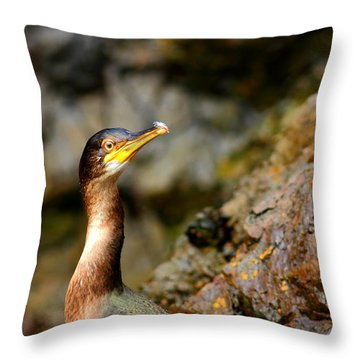 Throw Pillow featuring the photograph Immature Shag by Richard Patmore