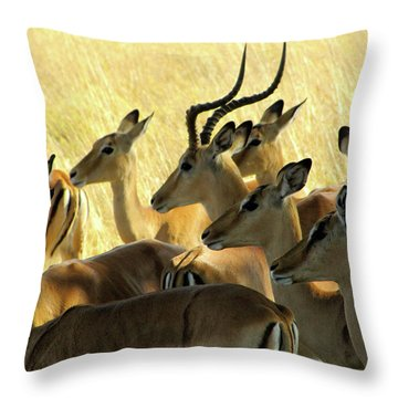 Impalas In The Plains Throw Pillow