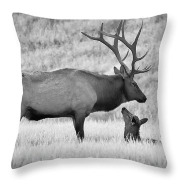 Throw Pillow featuring the photograph In Charge by Kelly Marquardt