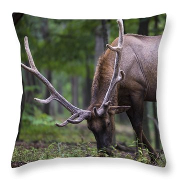 In Full Velvet Throw Pillow