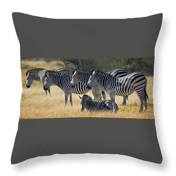 In Line Zebras Throw Pillow