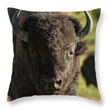 In Rut Throw Pillow
