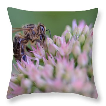 In Search Of Nectar Throw Pillow
