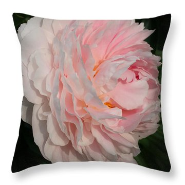 In The Evening Sun Throw Pillow