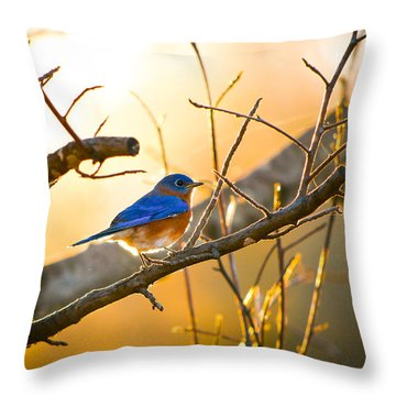 In The Light Throw Pillow by Shelby  Young