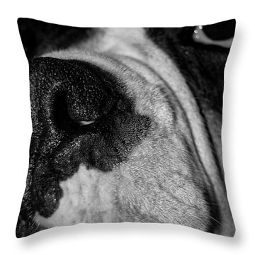 In Your Face II Throw Pillow by DigiArt Diaries by Vicky B Fuller