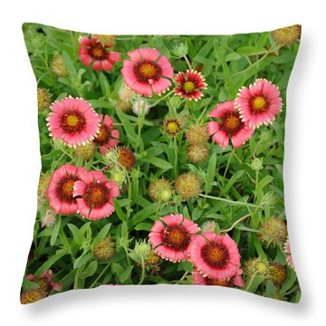 Throw Pillow featuring the photograph Indian Blanket Flowers by Bradford Martin